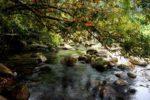 Suối Nước Moọc hòn ngọc lục bảo của Quảng Bình